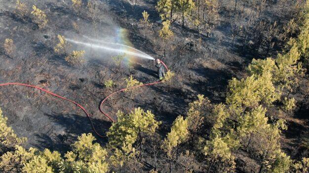 """Pożar lasu w Jabłonnie. """"Ogień szybko się rozprzestrzeniał"""""""