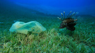 Zaskakująco mało oceanicznych śmieci